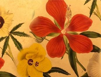 Oude Botanische Prenten : Oude prenten van amsterdam vogue kunstenaars van gogh rembrand